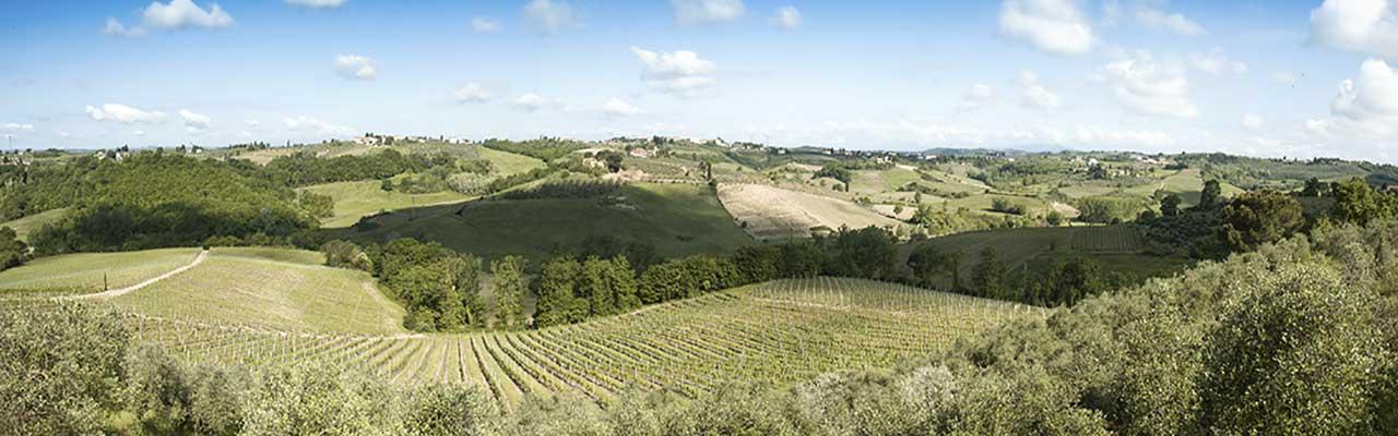 Azienda-Agricola-Casa-di-Monte-3